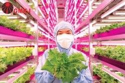 new plant grow project in China
