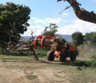 2.5 ton wheel loader with log fork