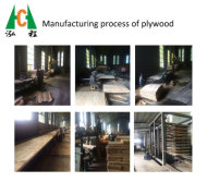 Manufacturing Process of Plywood