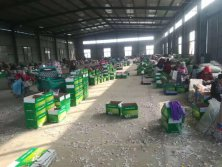 Processing factory of garlic