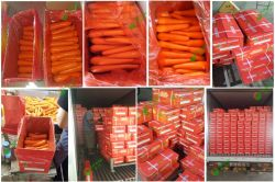 Fresh Carrot M&L to Bangladesh