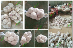 2019 Normal White Garlic 5.0-6.0cm, 500g*20/mesh bag to Malaysia