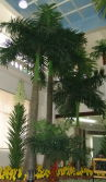 Royal Indonesia Palm Tree project