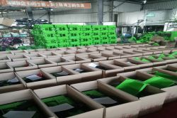 Production Line Product Packing