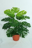 high quality artificial plants of Monstera