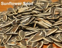 Hot Sale Dried Hot Sale Spiced Chinese Sunflower Seeds