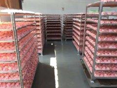 Kunming Foreverose Trading Co., Ltd.