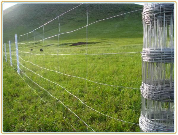 China Fixed Knot Woven Wire Field Fence - China Farm/Horse/Goats ...
