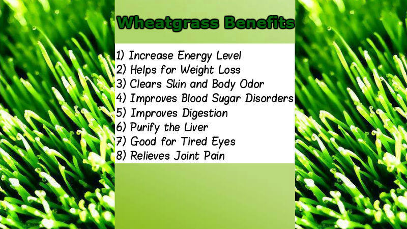 High Quality ISO Certified Barley / Wheat Grass Juice Powder