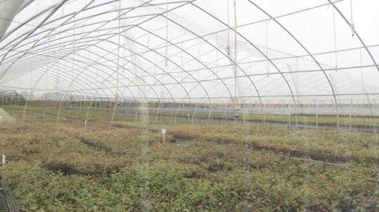 China Tu Plastic Agricultural Used Film Vegetable Seeding Greenhouse Near Me China Greenhouse Plastic Greenhouse