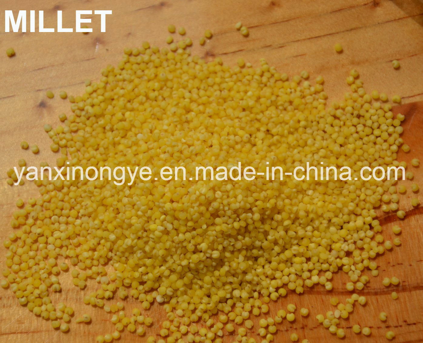 Highly Nutrition Nourishing Yellow Hulled Millet Organic Selenium Millet pictures & photos