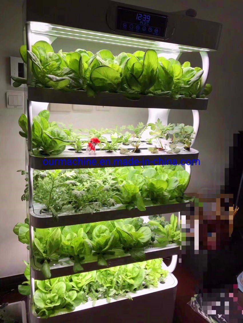 China Hydroponic System Soilless Culture Indoor Garden