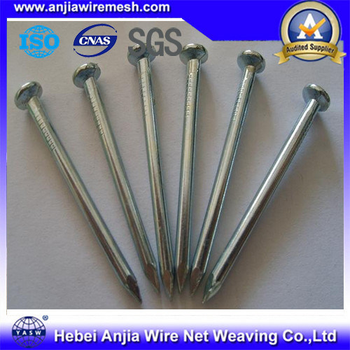 Galvanized Iron Nails Roofing Nails / Common Nails / Concrete Nails pictures & photos