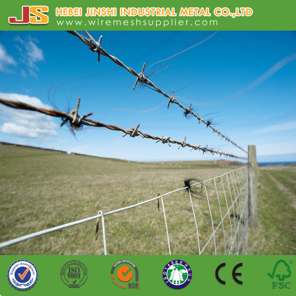 China Rural Environment Open Fields Double Strands Barbed Wire for ...