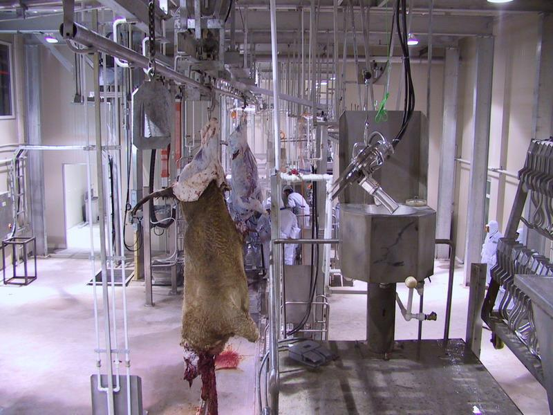 Cow Abattoir Made in