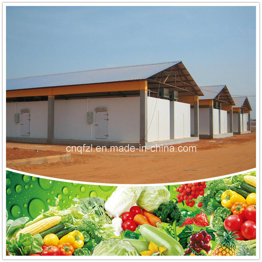 Cold Room for Fruits and Vegetables pictures & photos