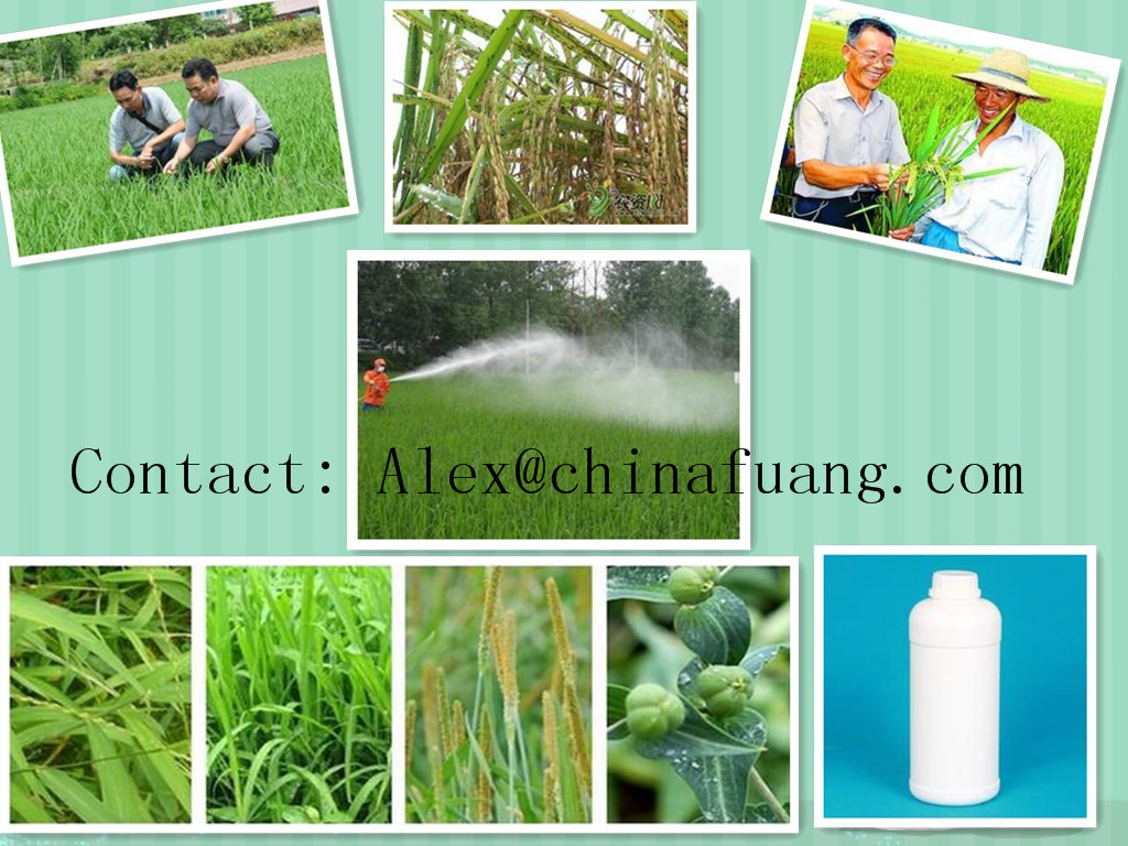 Agrochemicals Factotry Fungicide 85%Tc, 90%Tc, 80% Wp, 50%Wp Mancozeb