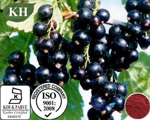 China Origin Natural Black Currant Extract Anthocyanins Anthocyanidins