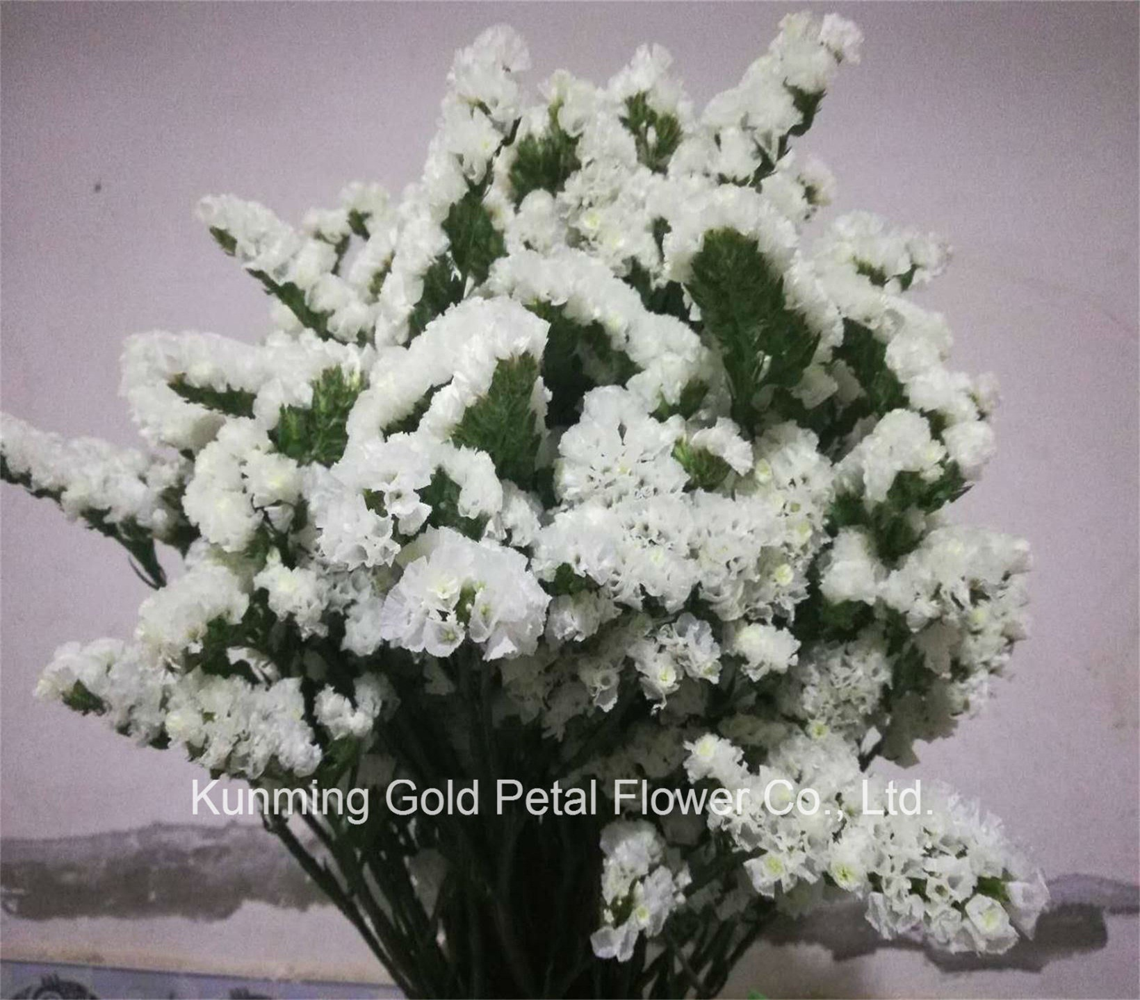 China High Quality Salable Fresh Cut Flowers White And Light Purple
