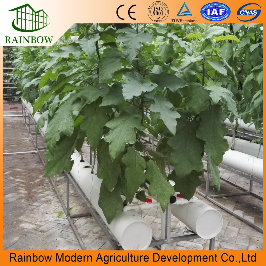 China Multi-Span Greenhouse with Fertilizer Soilless Culture