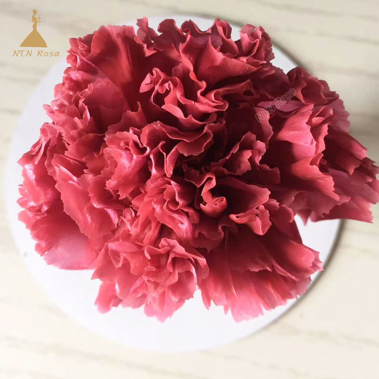 China Natural Carnation Preserved Flower Instead Of Silk Flowers