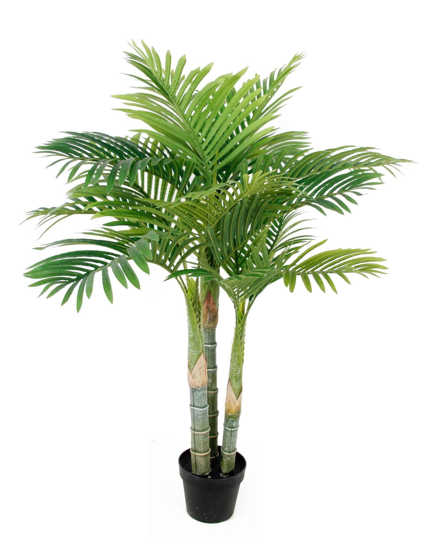 Bamboo Palm Tree Indoor