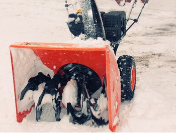 7HP Snow Blower with Track pictures & photos