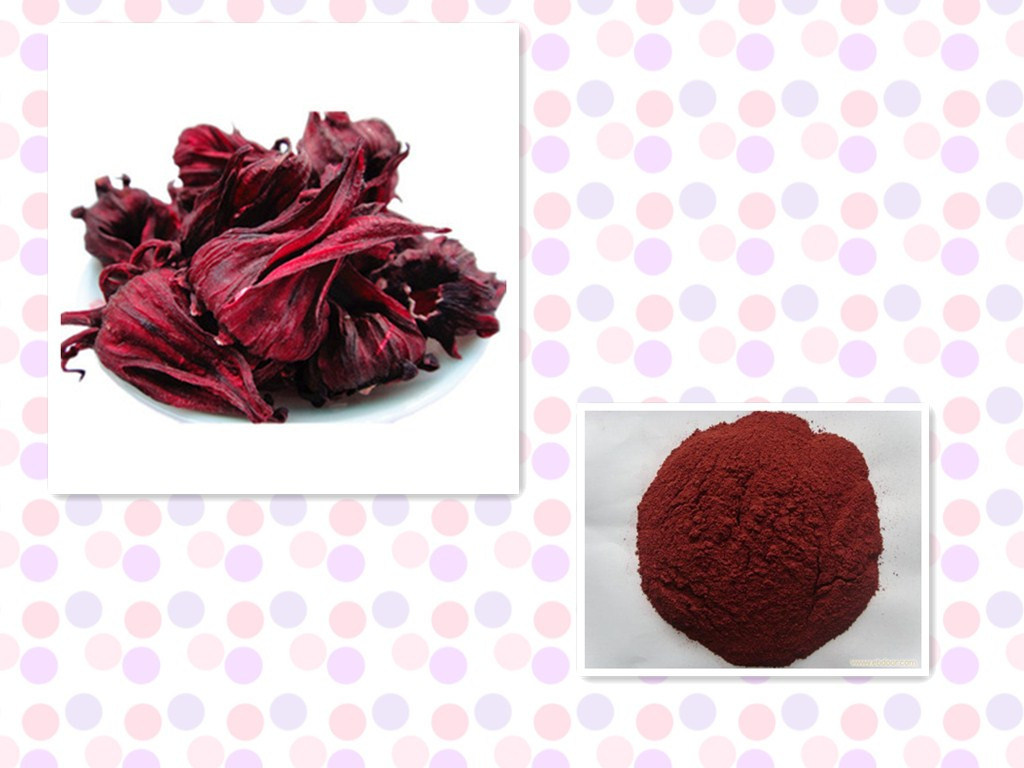 China Hibiscus Flower Extract Roselle Extract Anthocyanidins 5 25