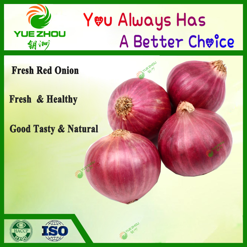 Exported Fresh Red Onion to Dubai with High Quality pictures & photos