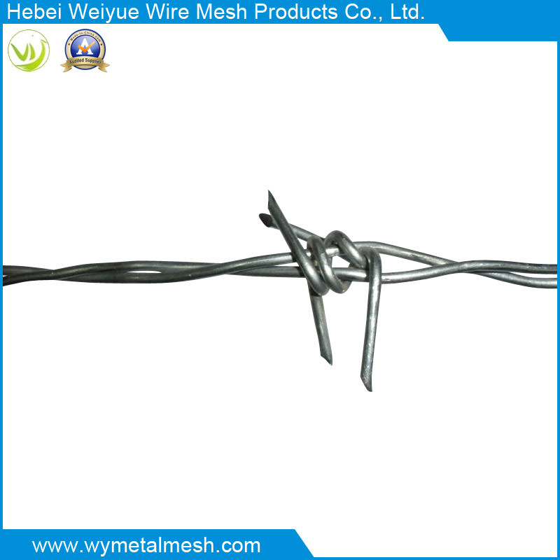 China Double Line Electro Galvanized Barbed Wire - China Barbed Wire ...