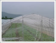 Greenhouse PE Anti Insect Plastic Mesh Safety Net