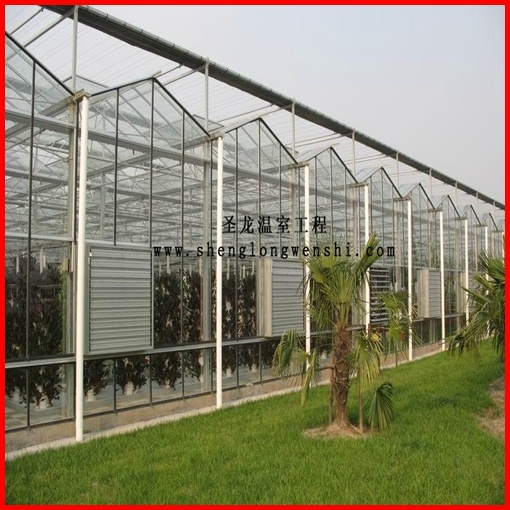 Agriculture Multi-Span Venlo Polycarbonate Sheet Greenhouse for Sale