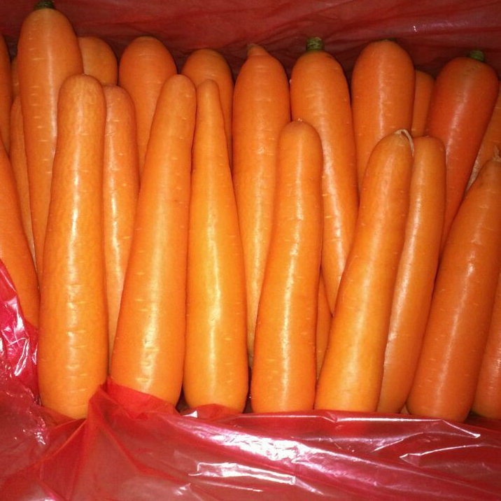 Fresh Carrot New Crop Harvest pictures & photos