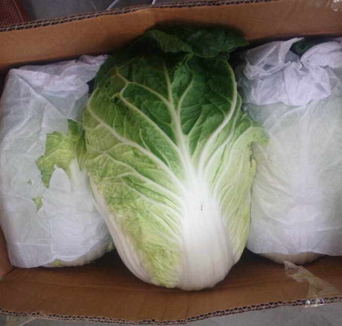Good Quality of Fresh Cabbage From China pictures & photos