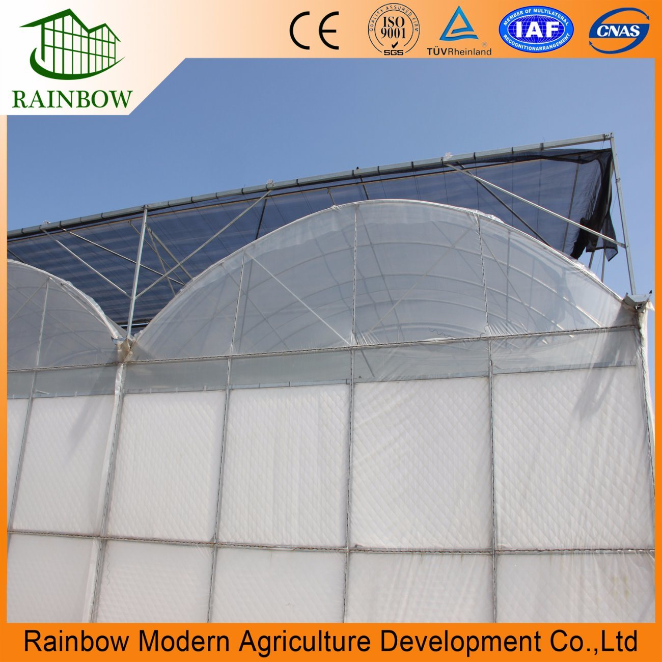 Agricultural Multi Span Plastic Greenhouse For Growing Vegetables