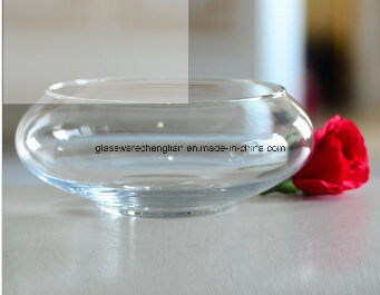 Hot Sale Clear Hydroponic Glass Vase (V-024)