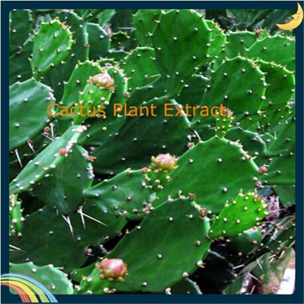 China Pure Natural Cactus Hoodia Gordonii Extract China Cactus