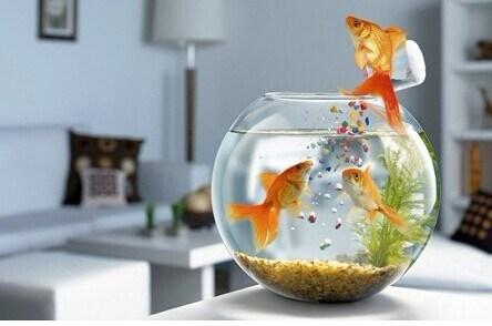 china round glass fish bowl acrylic fish tank acrylic aquarium