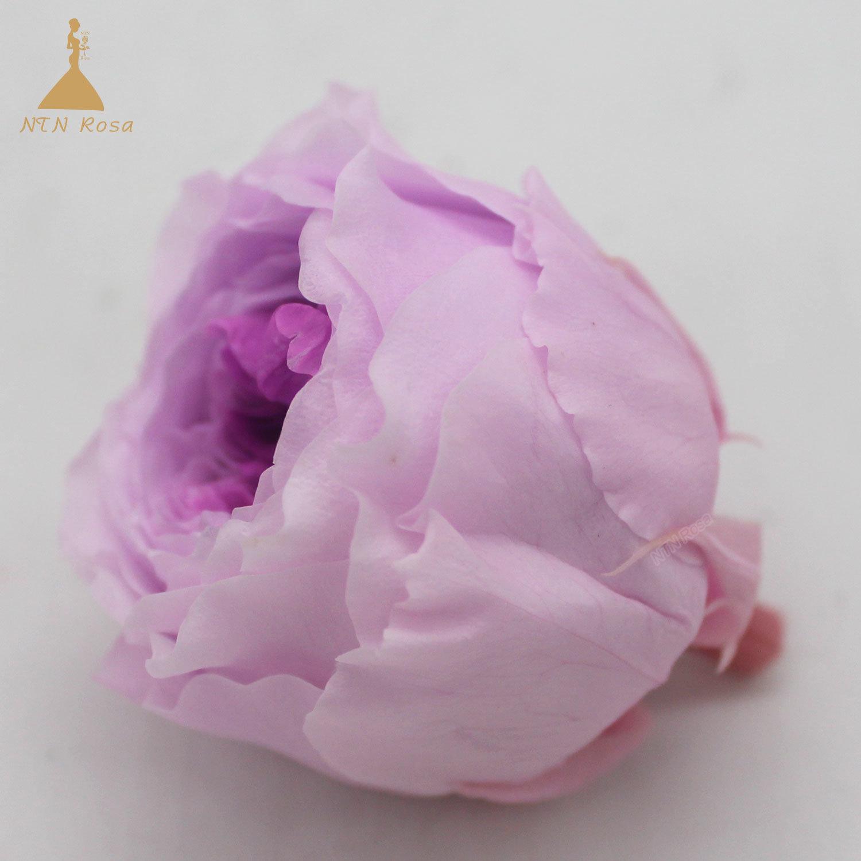 China Bulk Wholesale Preserved David Austin Roses For Floral