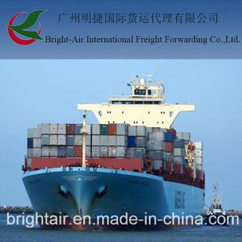 [Hot Item] International Shipping Companies Shipment Tracking Sea Freight  From China to Paita, Peru