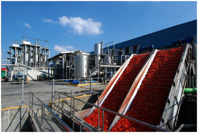 Cold Break Tomato Paste 30-32% Produced in Xinjiang, High Lycopene and Good Color