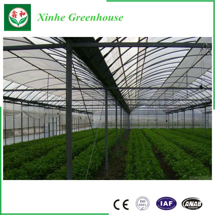 Agricultural Tunnel Plastic Greenhouse For Growing Vegetables