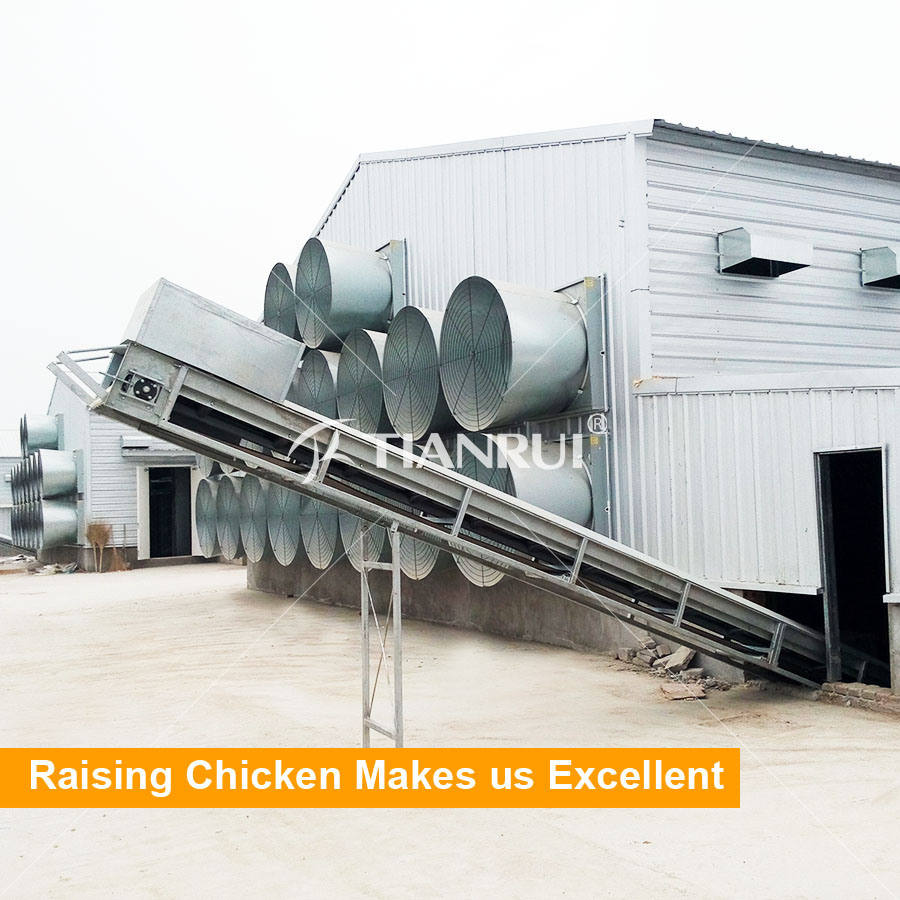 Low Cost Chicken Broiler Poultry Shed Farm House Design