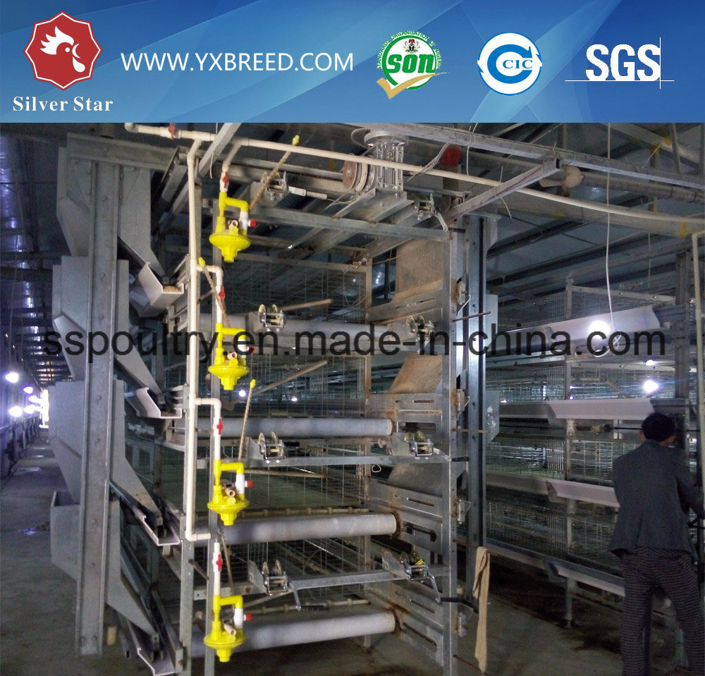 Machinery H Type Chicken Cage Broiler Automatic System Poultry Farms