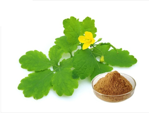 China Celandine Extract Chelidonium Majus, 2% Chelerythrine ...
