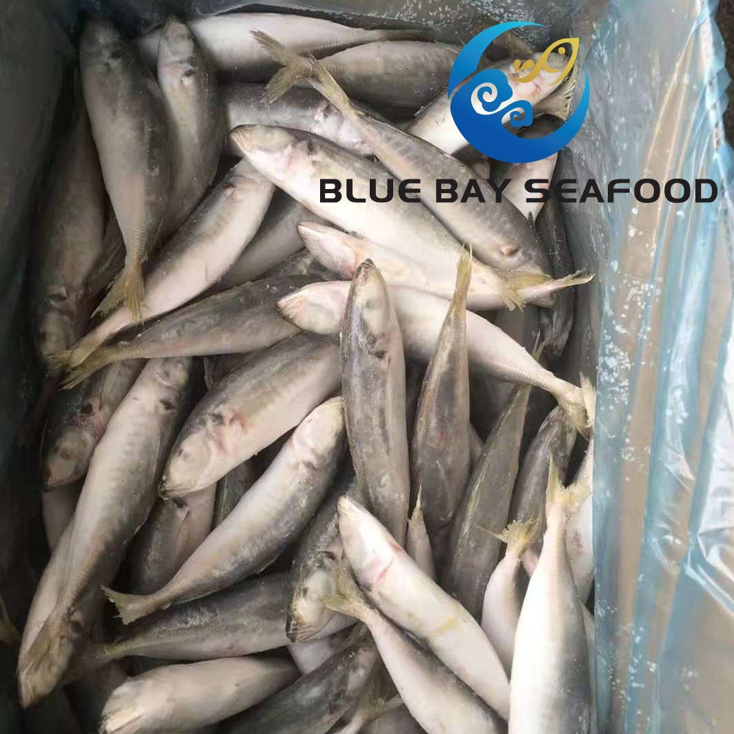 China Frozen Fish, Frozen Fish Manufacturers, Suppliers, Price    Made-in-China com