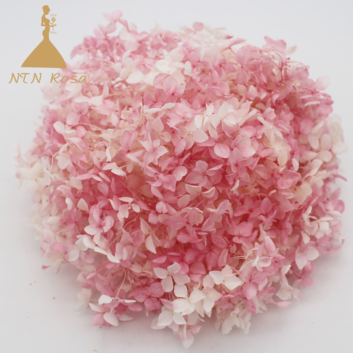 China Wholesale Hydrangea Flowers at Best Price with High Quality ...