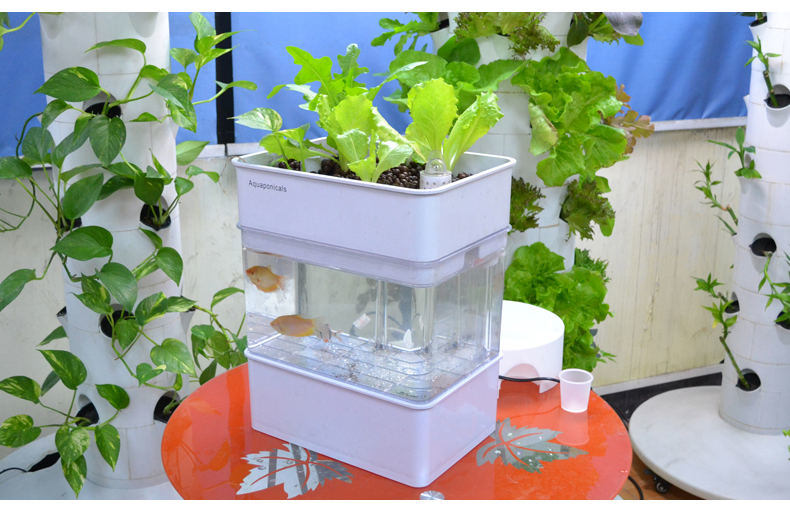 [Hot Item] Self Cleaning Fish Tank Indoor Kitchen Herb Garden Aquaponics  Organic Aquaponics System