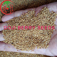 China Ningxia Nq 01 Nq 07 Goji Berry Seeds For Plant China Goji