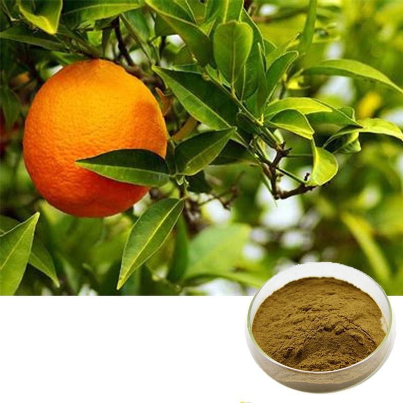 Top China 98% Synephrine Extract Citrus Aurantium Extract - China &WZ_02